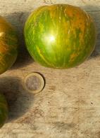 "Tomate ""Grünes Zebra"""