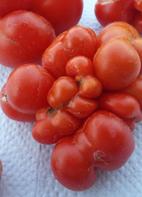 Tomate, Reise- / Reisetomate