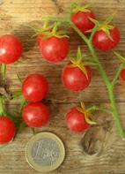 """Tomate """"Rote Murmel"""""""