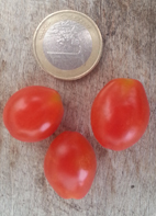 "Tomate, wild- ""Small Egg"" / Wildtomaten"
